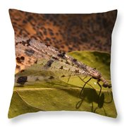 Spotted Mayfly Throw Pillow
