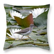 Spotted Sandpiper And Lilies Throw Pillow