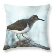 Spotted Sandpiper Throw Pillow