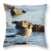 Spotted Sandpiper Keeping Sentry On The Bay Throw Pillow