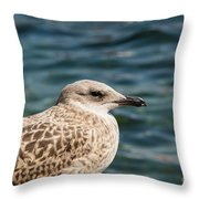 Spotted Seagull Throw Pillow