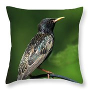 Spotted Starling Throw Pillow