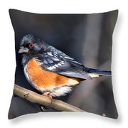 Spotted Towhee Portrait Throw Pillow