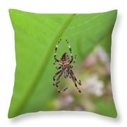 Spp-1 Throw Pillow