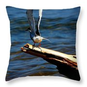 Spread And Tern Throw Pillow