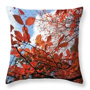 Spreading Orange Throw Pillow