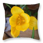 Spring 2010 Throw Pillow