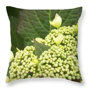 Spring Blooms Throw Pillow by Anna Villarreal Garbis