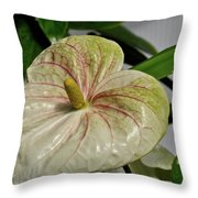 Spring Bulb Throw Pillow