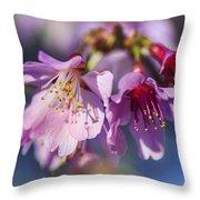 Spring Burst Throw Pillow