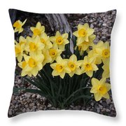 Spring Cheerleaders - Daffodils Throw Pillow