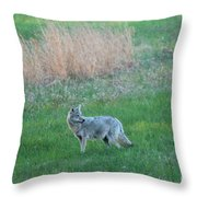 Spring Coyote  Throw Pillow