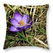 Spring Crocus Throw Pillow