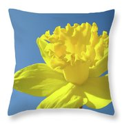 Spring Daffodil Flowers Art Prints Blue Sky Baslee Troutman Throw Pillow