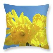 Spring Daffodils Flowers Garden Blue Sky Baslee Troutman Throw Pillow
