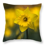 Spring Daffoldil Throw Pillow