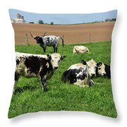 Spring Day With Cows On An Amish Cattle Farm Throw Pillow