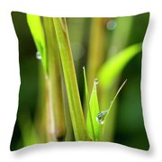 Spring Droplets Throw Pillow