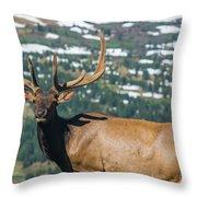 Spring Elk Throw Pillow