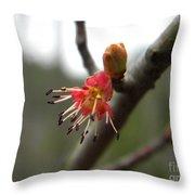 Spring Flower Closeup 1 Throw Pillow