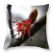 Spring Flower Closeup 2 Throw Pillow