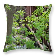 Spring In The Mountains At American Fork Canyon Utah Throw Pillow
