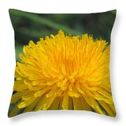 Spring Is In Bloom Throw Pillow