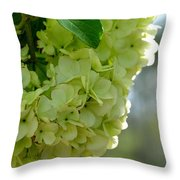 Spring Is In The Air -vines Botanical Garden Throw Pillow