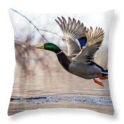 Spring Mallard  Throw Pillow