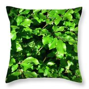 Spring New Beech Leaves Throw Pillow