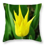 Spring Radiance Throw Pillow