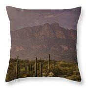 Spring Rain In The Sonoran  Throw Pillow