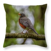 Spring Robin Throw Pillow