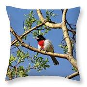 Spring Rose Breasted Grosbeak Throw Pillow
