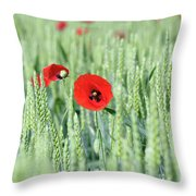 Spring Scene Green Wheat And Poppy Flowers Throw Pillow