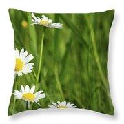 Spring Scene White Wild Flowers Throw Pillow