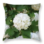 Spring Snowball Throw Pillow