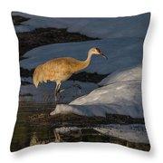 Spring Sunset With Sandhill Crane Throw Pillow