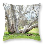 Spring Sycamore Tree Throw Pillow