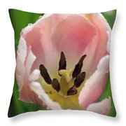 Spring Tulips 168 Throw Pillow