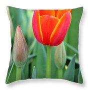 Spring Tulips 211 Throw Pillow