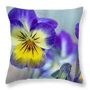 Spring Violas Throw Pillow