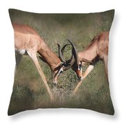 Springbok Samburu Kenya Throw Pillow