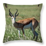 Springbuck And Butterfly Throw Pillow