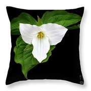 Spring's Beauty Throw Pillow