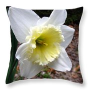 Spring's First Daffodil 1 Throw Pillow