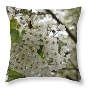 Springtime Abundance - Masses Of White Blossoms Throw Pillow