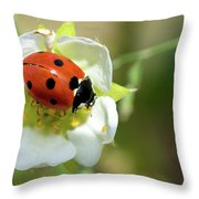 Springtime - Animals Throw Pillow