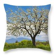 Springtime Apple Tree Panorama Throw Pillow