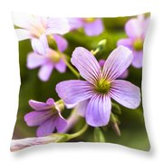 Springtime Blooms Violet Wood Sorrel 3 Throw Pillow